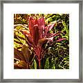 Ti Plant Framed Print