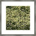 Tiny Meadow Flowers Framed Print