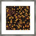 Tiny Yellow Flowrers On The Desert Floor Framed Print