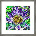 Top View Of A Beautiful Purple Lotus Framed Print