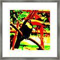 Toucan Tourcanna Framed Print