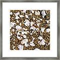 Towano Pebbles Framed Print