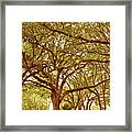 Tranquility Framed Print by Adele Moscaritolo