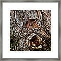 Tree Bark With Knothole Framed Print