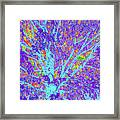 Tree Branches 10 Framed Print