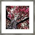 Tree Canopy Red Framed Print