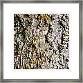Tree Trunk Detail Framed Print
