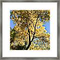 Tree In Fall Framed Print