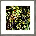 Tree Light Framed Print