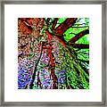 Tree Skin Framed Print