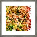 Tree With Autumn Leaves Framed Print
