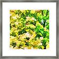 Trees And Leaves 1 Framed Print