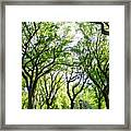 Trees Of Central Park, Nyc Framed Print