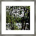 Trees Over Looking Water Framed Print