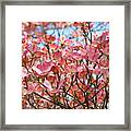 Trees Pink Spring Dogwood Flowers Baslee Troutman Framed Print