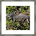 Treetop Iguana Framed Print