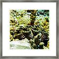 Tridacna3 Framed Print