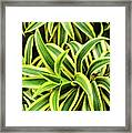 Tropical Plant Framed Print