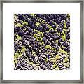 Tsingys, Karst Formations In The Tsingy Framed Print