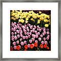 Tulip Greeting Card Framed Print