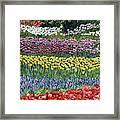 Tulip Tme Framed Print