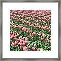 Tulip Town 14 Framed Print