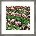 Tulip Town 8 Framed Print