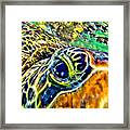 Turtle Eye Framed Print