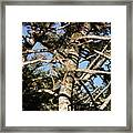 Twisted Branches Framed Print