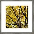 Twisted Gold Framed Print