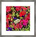 Two Of Dandelion. Floral Carpet. Framed Print