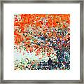 Under The Shade Of The Flamboyant Framed Print