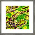 Urban Sprawl Framed Print