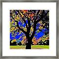 Oak Autumn Vasona Framed Print