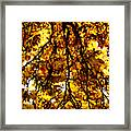 Veins Of Life  Framed Print