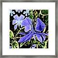 Vinca Art Framed Print