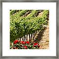 Vineyards In The Galilee  4 Framed Print