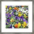 Viola In The Spring Are Especially Beautiful. Framed Print