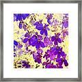 Violet Moths Framed Print