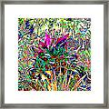 Viva Framed Print by Eikoni Images