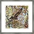 Vulture Glide Framed Print