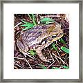 Warts And All Framed Print