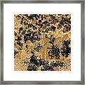 Waxleaf Privet Blooms On A Sunny Day In Black And White - Color Invert With Golden Tones Framed Print