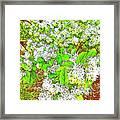Waxleaf Privet Blooms On A Sunny Day Framed Print