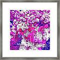 Waxleaf Privet Blooms On A Sunny Day With Magenta Hue Framed Print