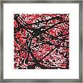 Web Of Fire Framed Print