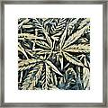 Weed Abstracts Four Framed Print