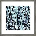 Weeds And Sky Framed Print