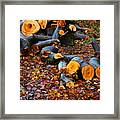 Wet Logs Framed Print