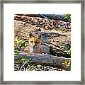 What A Fox Framed Print